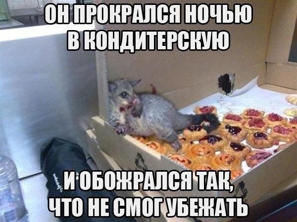 http://pravdazen.nethouse.ru/static/img/0000/0002/6940/26940684.c91xmu7su0.W665.jpg